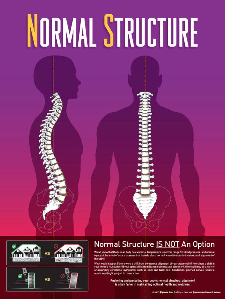 Chiropractic Eureka MO Normal Structure